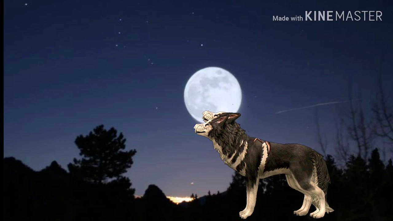 Волк воет на луну WildCraft - YouTube