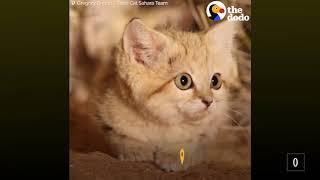 Песчаные котята впервые улыбаются на камеру