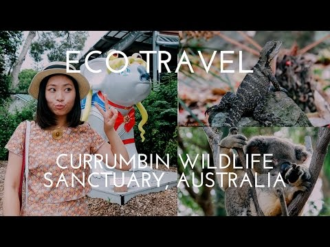Currumbin Wildlife Sanctuary, Gold Coast, Australia: Eco Travel