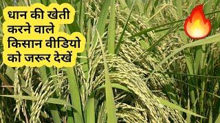 धान की खेती करने वाले किसान भाई इस वीडियो को जरूर देखें