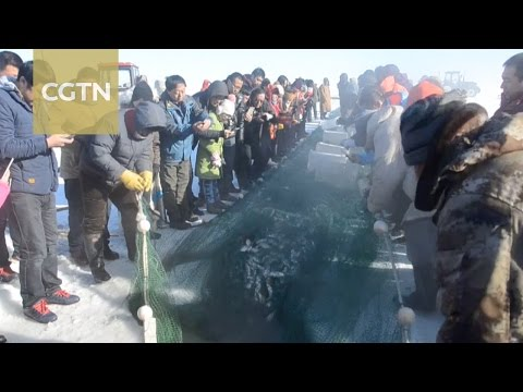 Winter fish harvest begins in north China