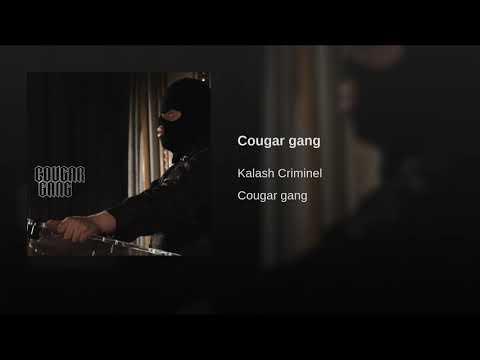 Cougar gang