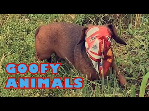 Goofy Animals, the most cute and funny animals compilation