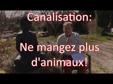 Canalisation: Ne Manger Plus D'animaux!