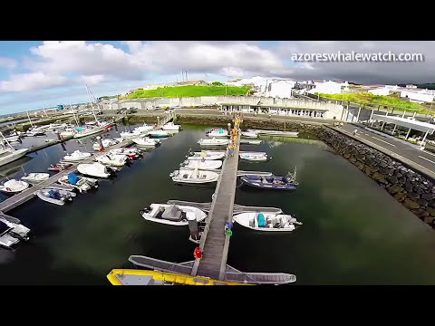 Whale Watching in the Azores Islands - Portugal!