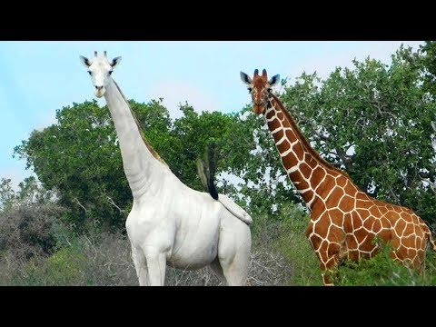 RAREST Completely White Animals In The World!