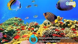Akvaryumda beslenecek balık sayısı nasıl belirlenir?