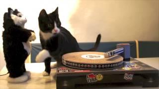 Après le Grumpy Cat, les DJ Cats