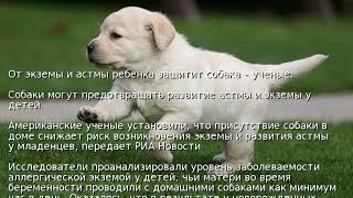 От экземы и астмы ребенка защитит собака – ученые