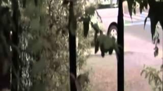 Repeat youtube video La Nana  By Alex085