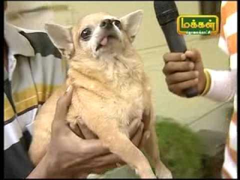 makkal tv chellapranigal dog show