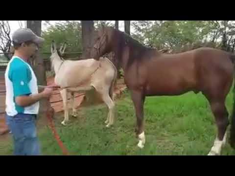 жеребец засадил лошадки