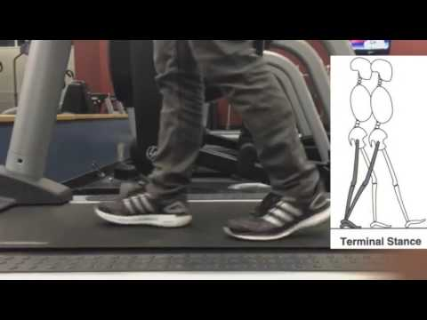 Gait Cycle Breakdown