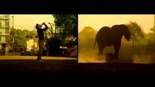Классное сравнение человека и животных