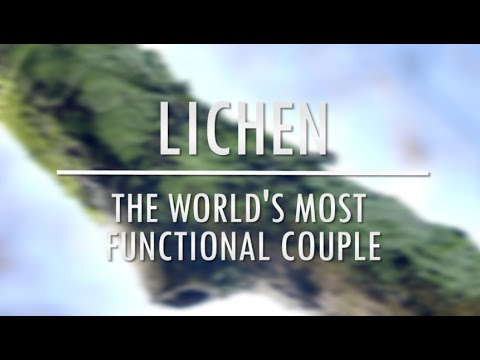 Lichen - the world's most functional couple | Bristol Nature Channel
