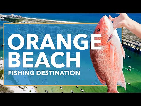 Fishing In Orange Beach: All You Need To Know | FishingBooker