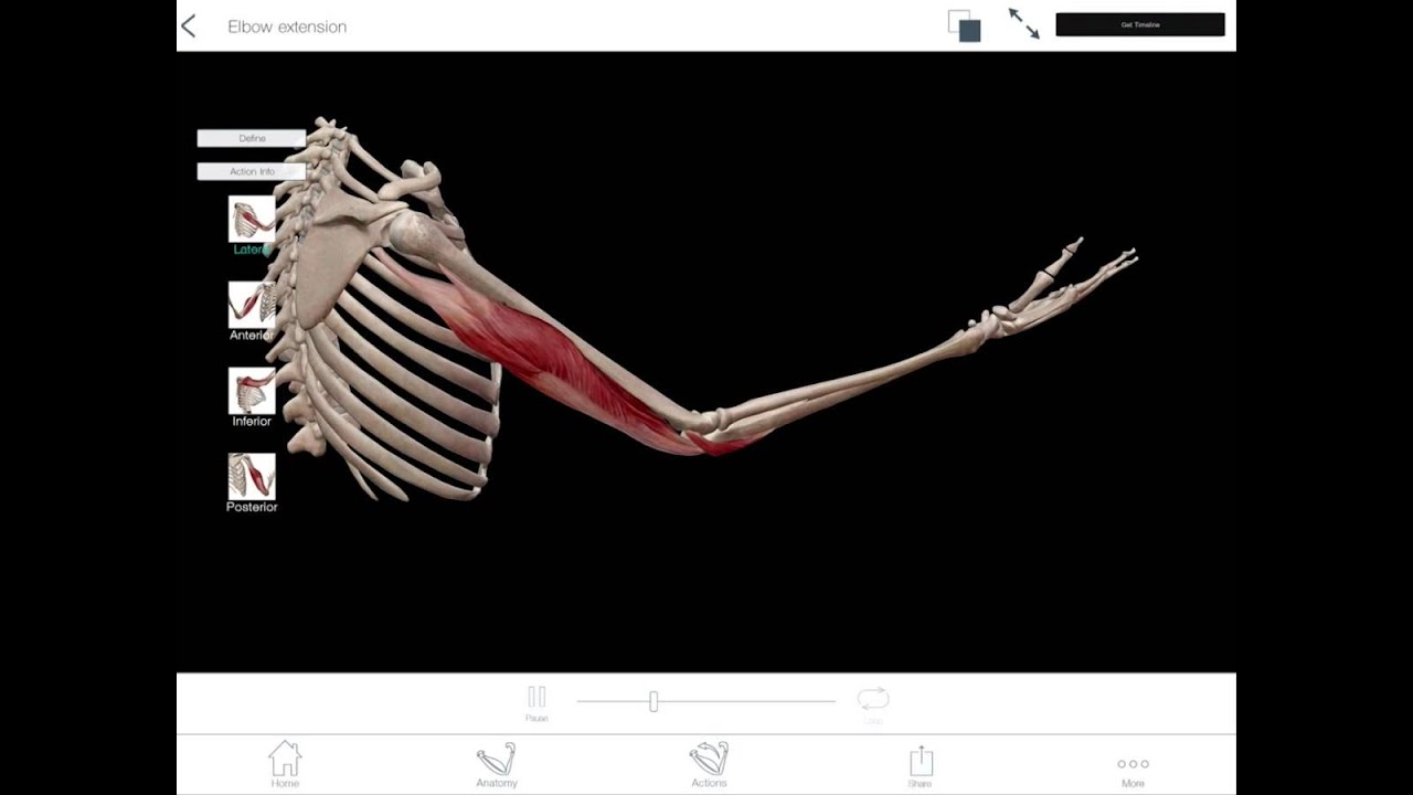 Learn@Visible Body - Elbow Flexion and Extension - YouTube