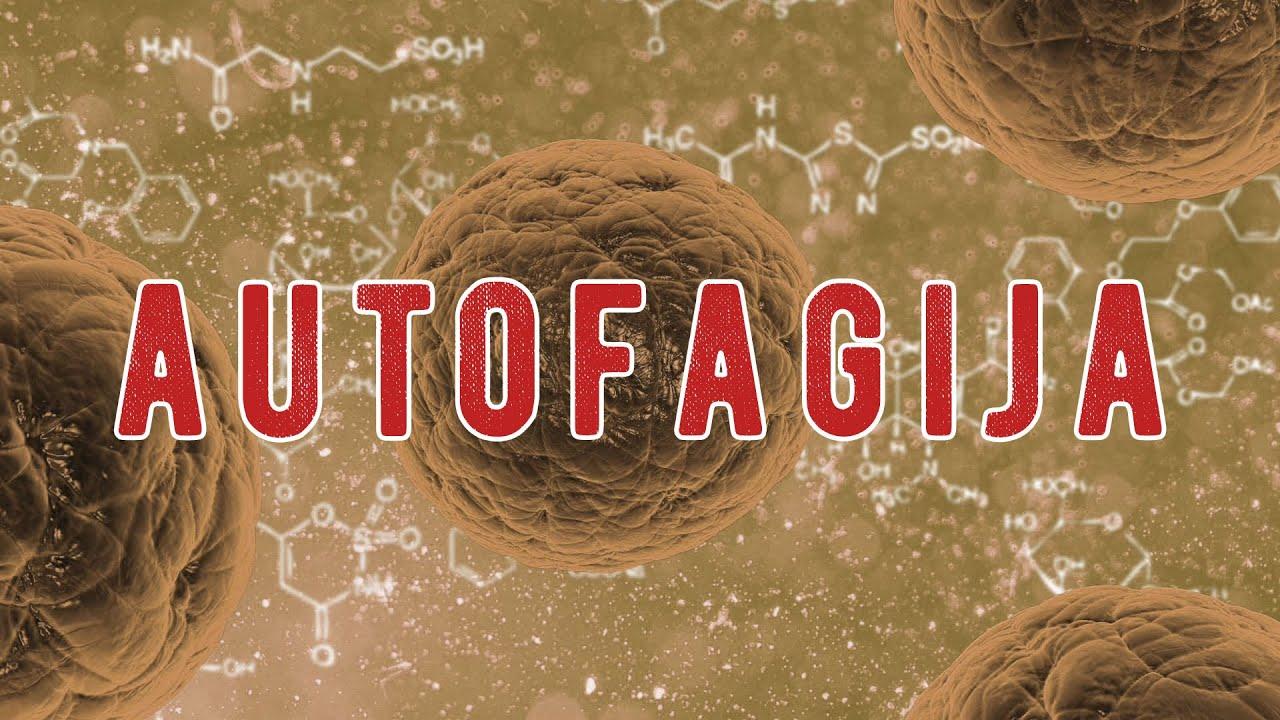 Šta je autofagija? Kako dolazi do autofagije? - YouTube