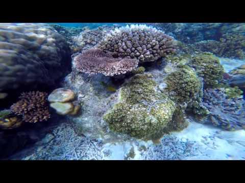 Lifou Isle Coral Reef Snorkelling Adventure
