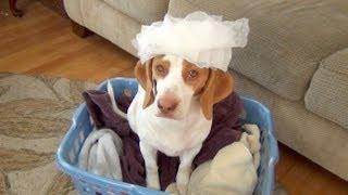 Dog Loves Dryer Sheets : Cute Dog Maymo