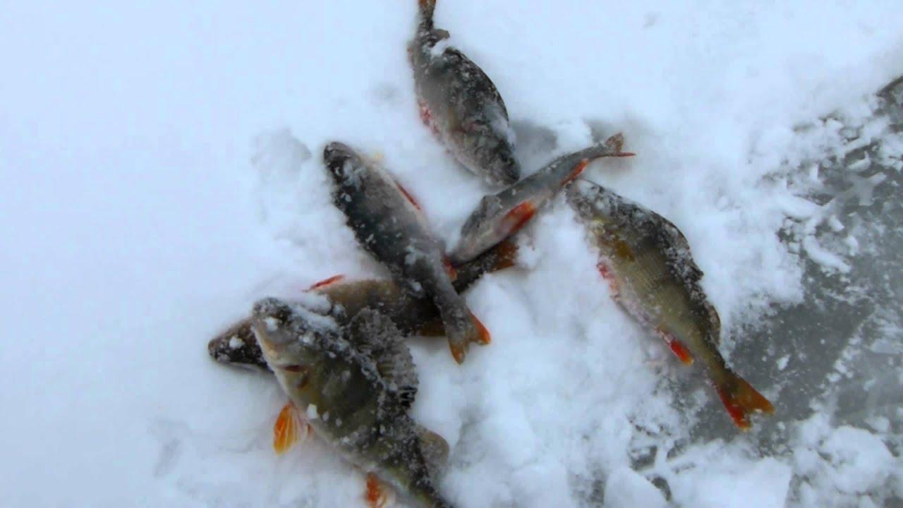 Отчеты о рыбалке Марий Эл - Рыбалка, где клюет!