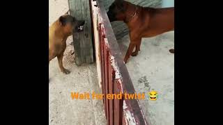 dog fight and funny video🐶#dogfight #dogdeath#dogagressive #short#viral