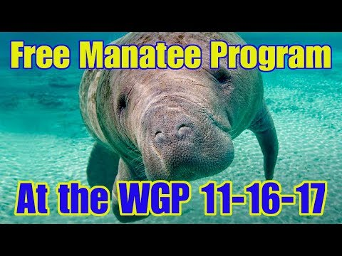Friends of the Withlacoochee Gulf Preserve Manatee Program, Thursday November 16 at 10am