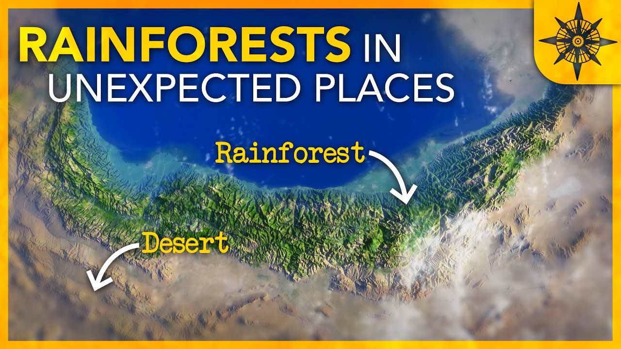 Why We Find Rainforests in Unexpected Places