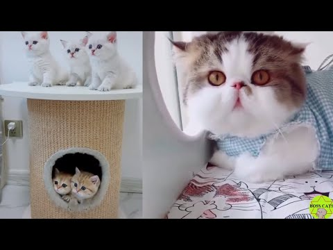 Cute cats in the world compilation #8 - Boss Cats