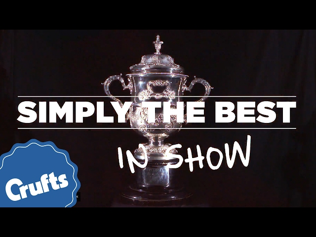 Simply The Best (in show) at Crufts