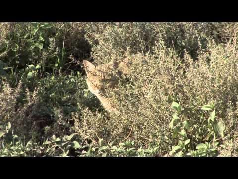AFRICA SAFARI TANZANIA HD