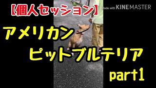 愛知県から個人セッション来られました。 ピットブル飼われるのは初めて...