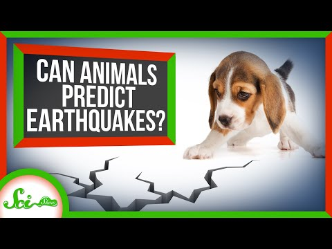 Can Animals Predict Earthquakes?