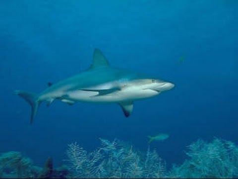 Documentaire : Méditerranée le Royaume perdue des Requins