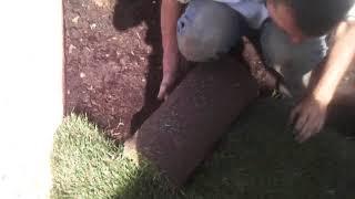 видео рулонные газоны в Москве