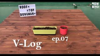 ep07 옥탑방 브이로그, 자취 브이로그, 토마토 키우…
