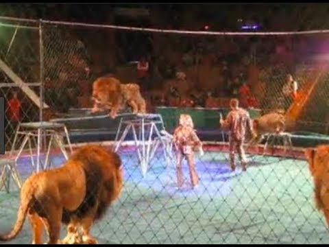 when circus animals attack compilation