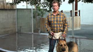How to Control Your Dog's Leash Behavior : Raising Your Dog