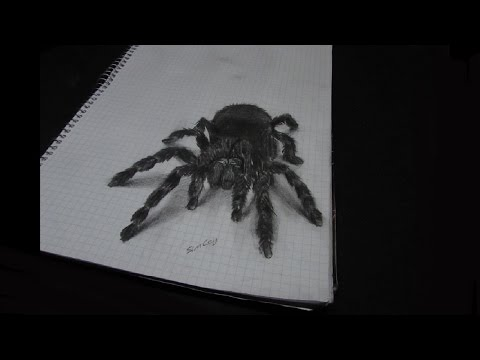 Gerçekçi 3 Boyutlu Örümcek Çizimi