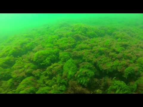 Black Sea diving - Tuzla 17.04 PART 3