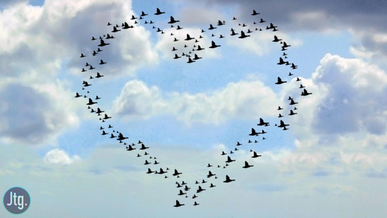 """Résultat de recherche d'images pour """"liberté coeur"""""""
