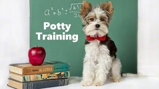 How To Potty Train A Dog - Dog House Training Tips - Housebreaking Dogs Fast & Easy
