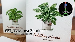 기초수채화/식물일러스트 칼라데아 /Calathea/아이…