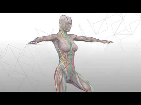 Introduction to Anatomy Trains