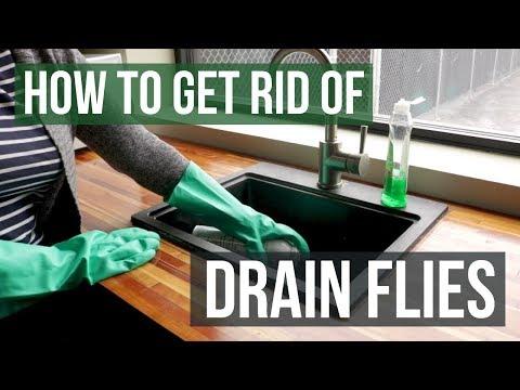 How to get rid of fruit flies in my sink