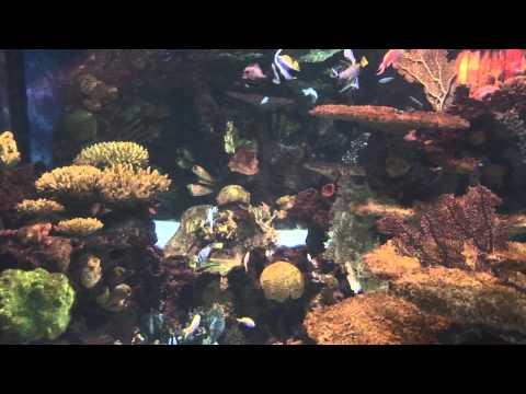 Vancouver Public Aquarium  -  music bakery re-edit