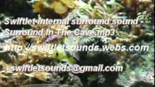 Swiftlet Surround Sound for swiftlet farms- Surround In The Cave mp3