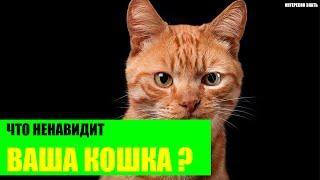 Что ненавидит ваша кошка?