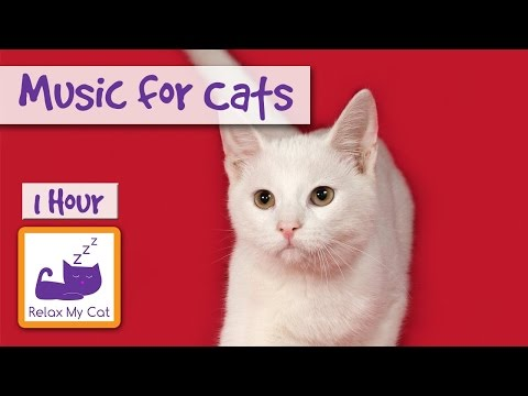 1 Hour of Music for Cats - Relax your Cats and Send them to Sleep CATS LOVE THIS MUSIC!