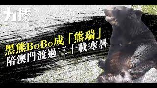 黑熊BOBO成「熊瑞」陪澳門渡過三十載寒暑